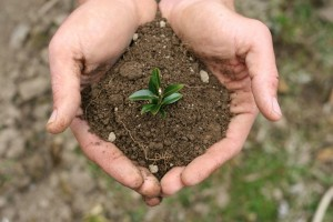 Photograph of hands holding a seedling is clump of soil Nature versus Nurture Thursday Thoughts blogpost. Copyright freeimages.com / Alicia Jo McMahan.